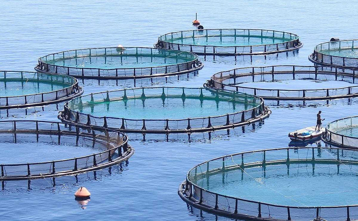 balık çiftliği - sea fish farm